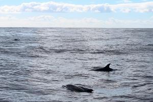 delfino naso a bottiglia