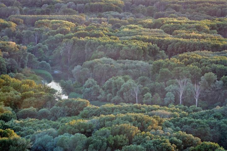 Auwald-von-oben-Kudich