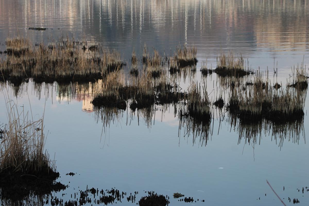 Birdwatching sul Lago Maggiore: l'Oasi della Bruschera ad Angera