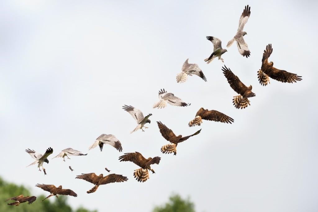 Immagine che contiene cielo, esterni, animale, uccello  Descrizione generata automaticamente