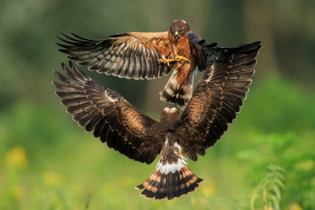 Immagine che contiene uccello, esterni, animale, erba  Descrizione generata automaticamente