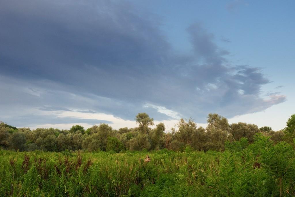 Immagine che contiene cielo, esterni, erba, albero  Descrizione generata automaticamente