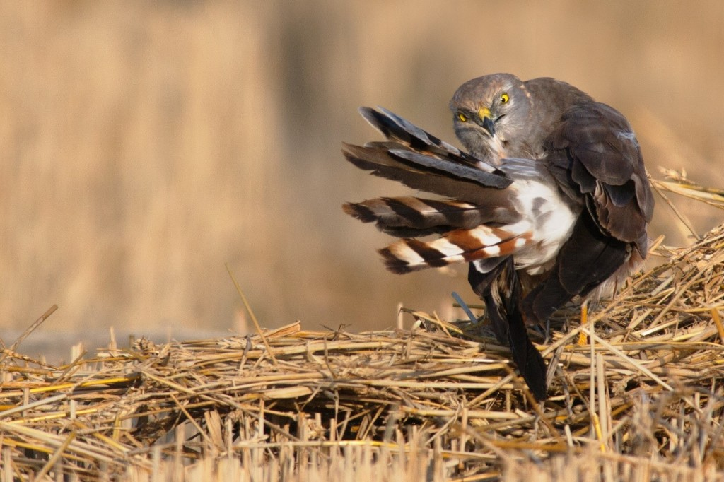 Immagine che contiene erba, uccello, esterni, animale  Descrizione generata automaticamente