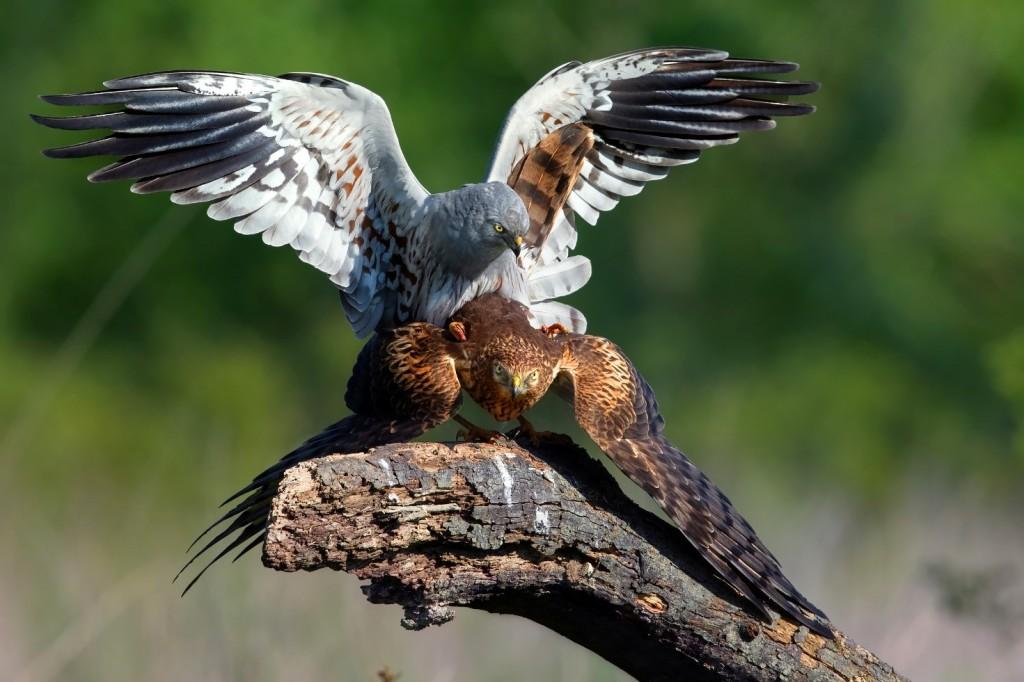 Immagine che contiene uccello, esterni, albero, animale  Descrizione generata automaticamente