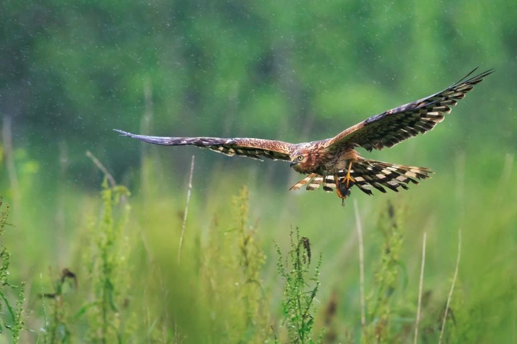 Immagine che contiene animale, erba, uccello  Descrizione generata automaticamente