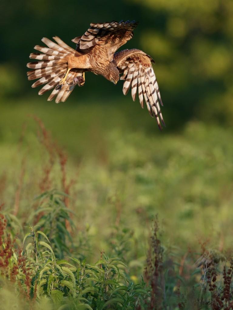 Immagine che contiene esterni, uccello, erba, animale  Descrizione generata automaticamente